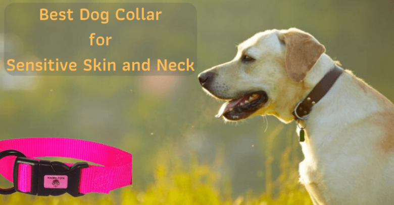 Dog Collar for Sensitive Skin and Neck