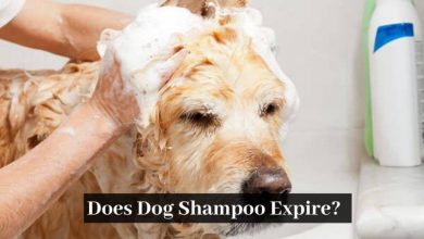 Does Dog Shampoo Expire
