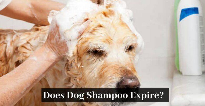 Does Dog Shampoo Expire