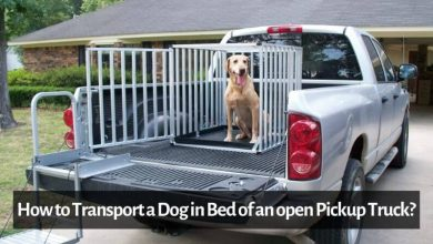 How to Transport a Dog in Bed of an open Pickup Truck