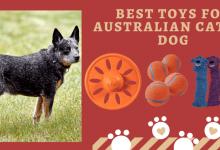 toys for Australian cattle dog