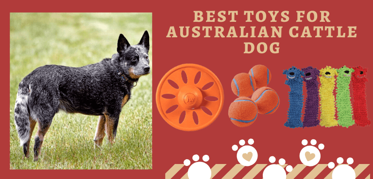 toys for Australian cattle dog