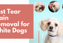 Tear Stain Removal for White Dogs