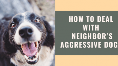 How to Deal with Neighbor's Aggressive Dog