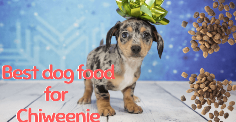 dog food for Chiweenie
