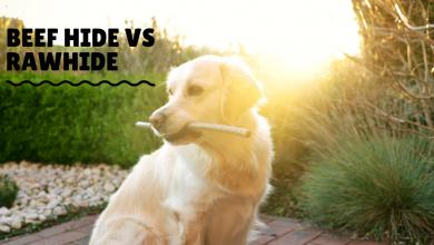 beef hide vs rawhide