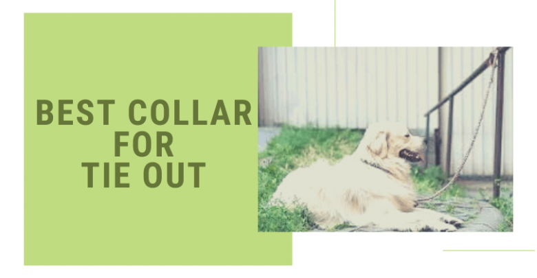 collar for tie out