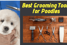 grooming tools for poodles