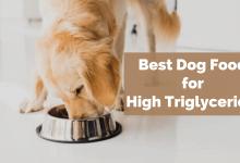 Best dog food for high triglycerides