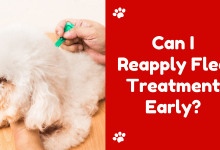 Can I Reapply Flea Treatment Early