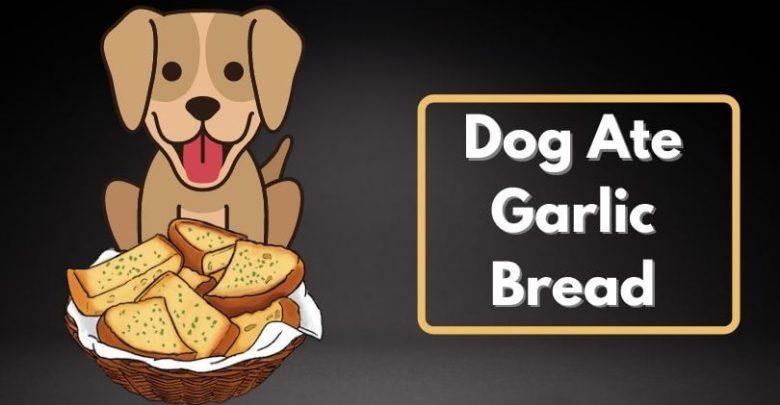 Dog Ate Garlic Bread