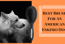 Best Brush For An American Eskimo Dog