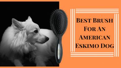 Best Brush For An American Eskimo Dog