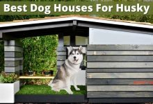 Best Dog Houses For Husky (1)