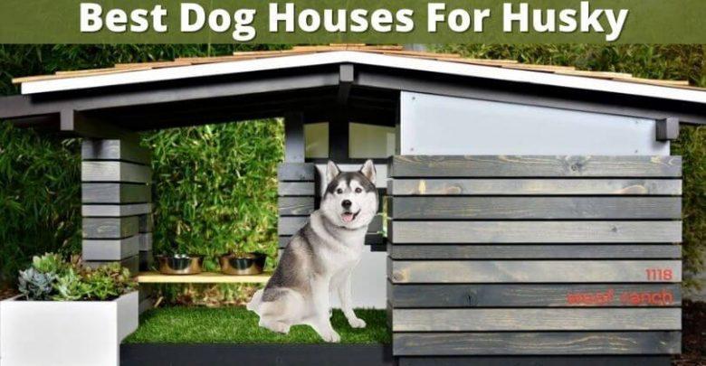 Best Dog Houses For Husky (1)