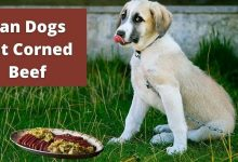Can dogs eat corned beef (1)