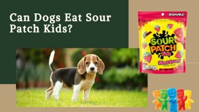 Can Dogs Eat Sour Patch Kids?