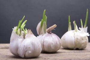 garlic bad