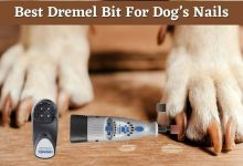 Best Dremel Bit For Dog's nails