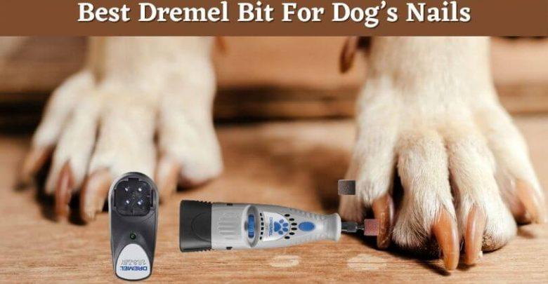 Best Dremel Bit For Dog's nails