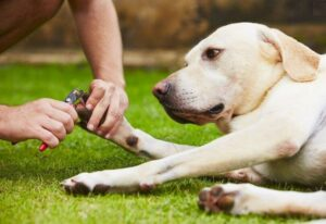 How To Restrain A large Dog For Nail Clipping