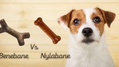 Benebone vs Nylabone