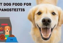 Best dog food for Panosteitis