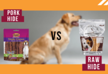 Pork Hide VS Rawhide – Which One Is Good For Dogs